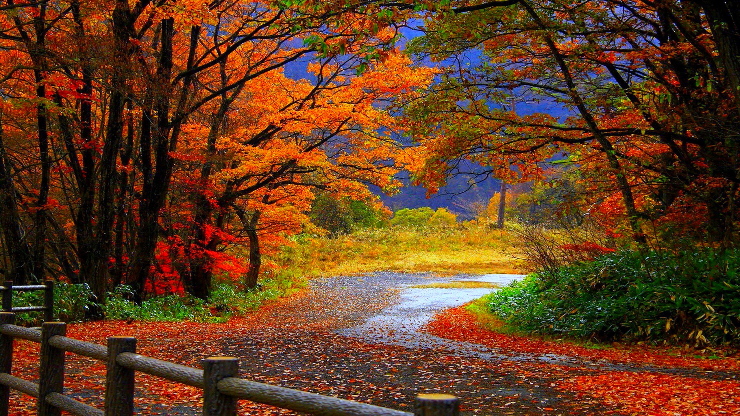 Autumn Tree in Fall HD Desktop Wallpaper Background download 2560x1440