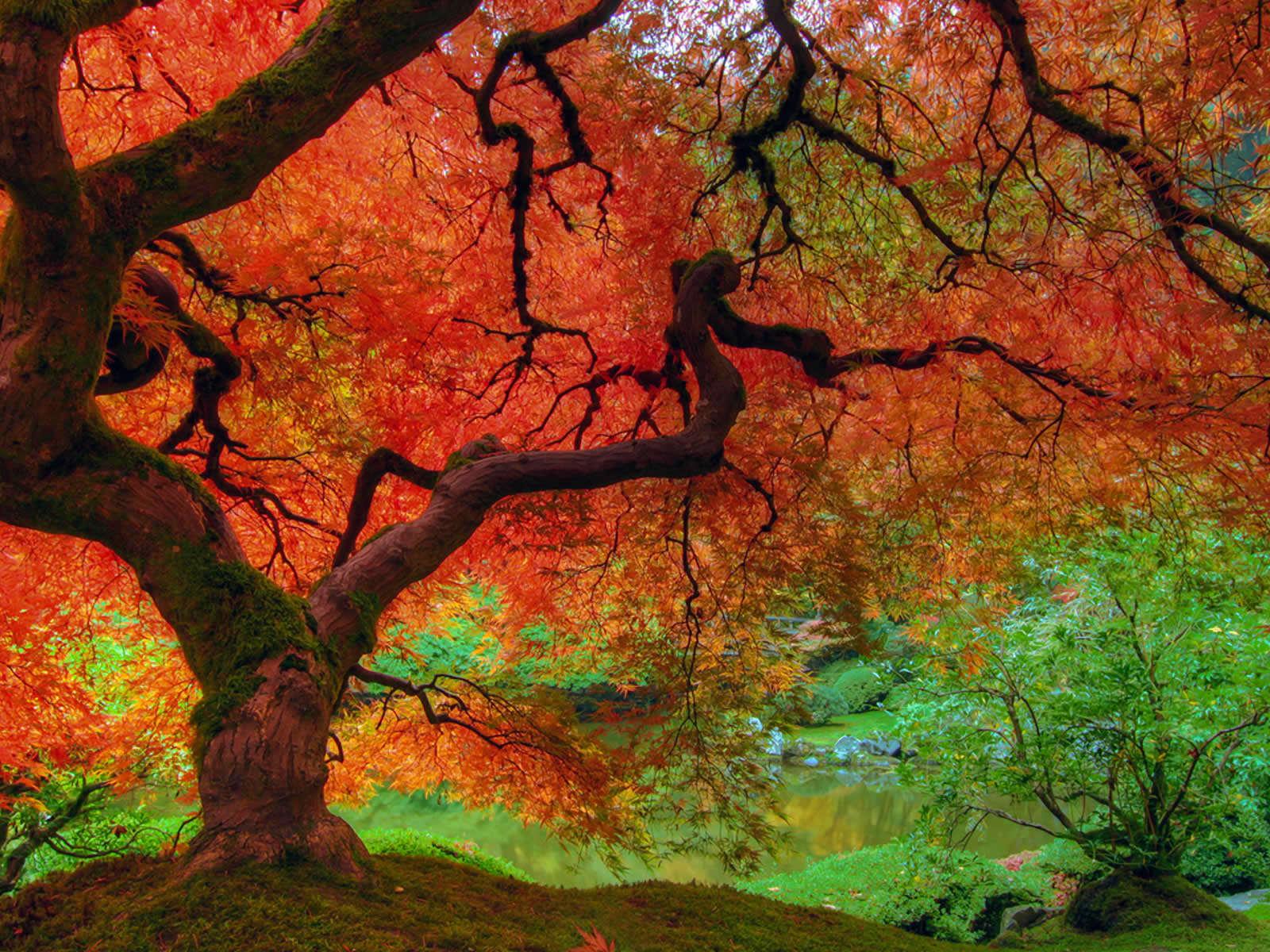 Fall Colors Wallpaper 1600x1200