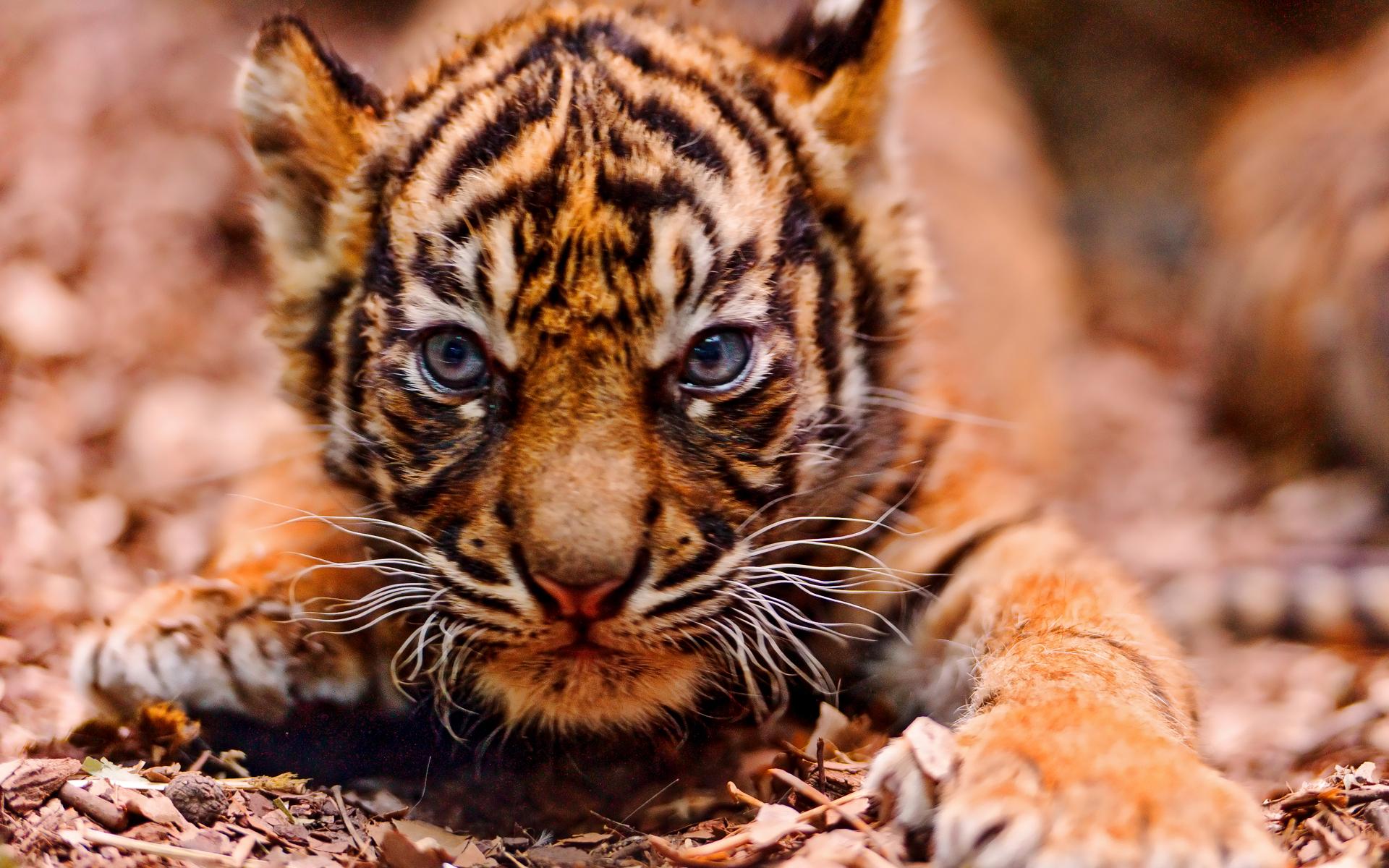Animal Wallpapers  Free Animal Desktop Wallpaper Desktop