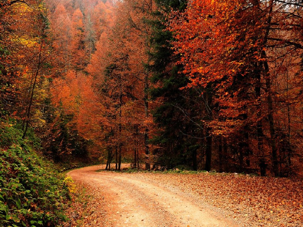Wallpapers Autumn Fall nature nature wallpapers popular 1024x768