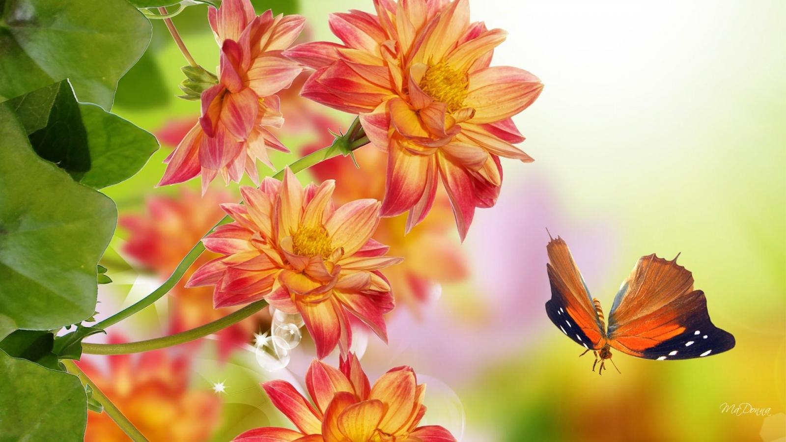Butterfly vs orange flowers wallpaper in Flowers   plants wallpapers 1600x900