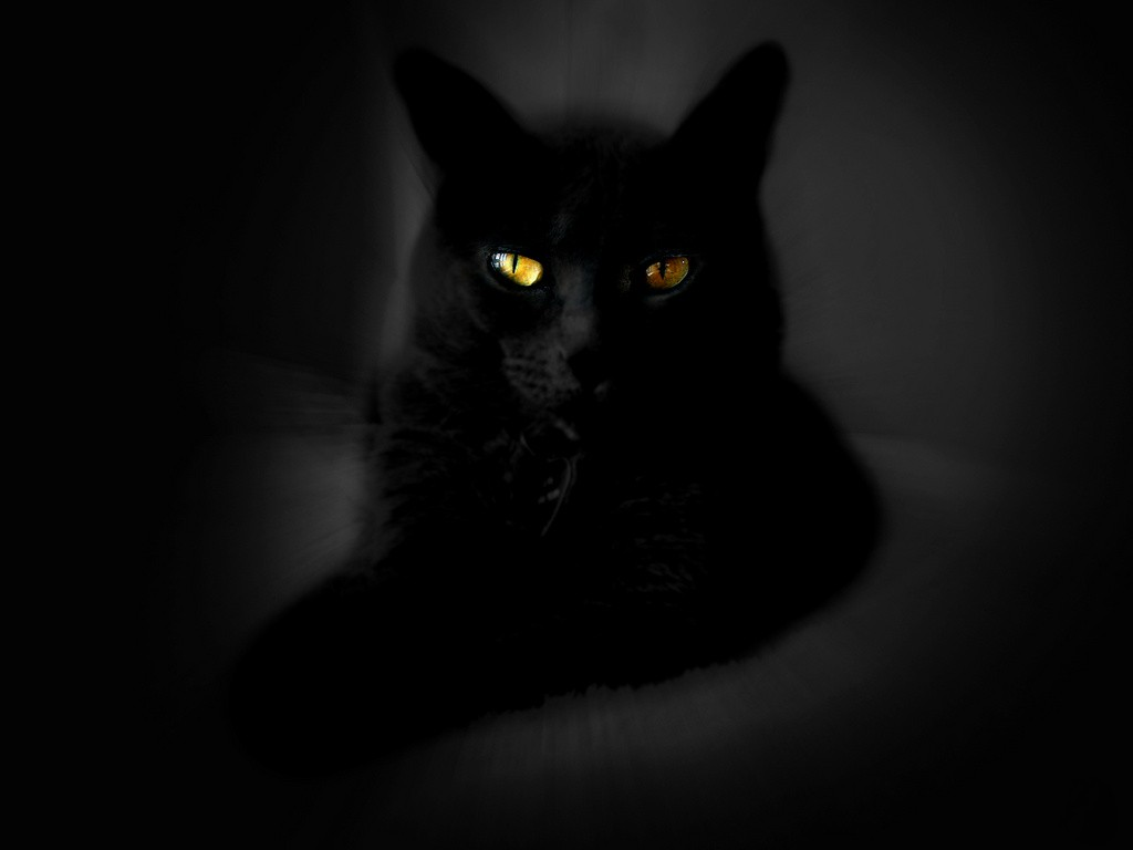 Cute Black Cat Wallpaper 1024x768