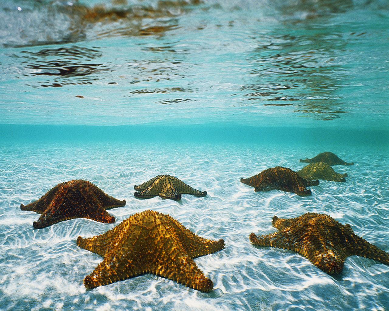 Beautiful Sea Wallpaper HD Freetopwallpapercom 1280x1024