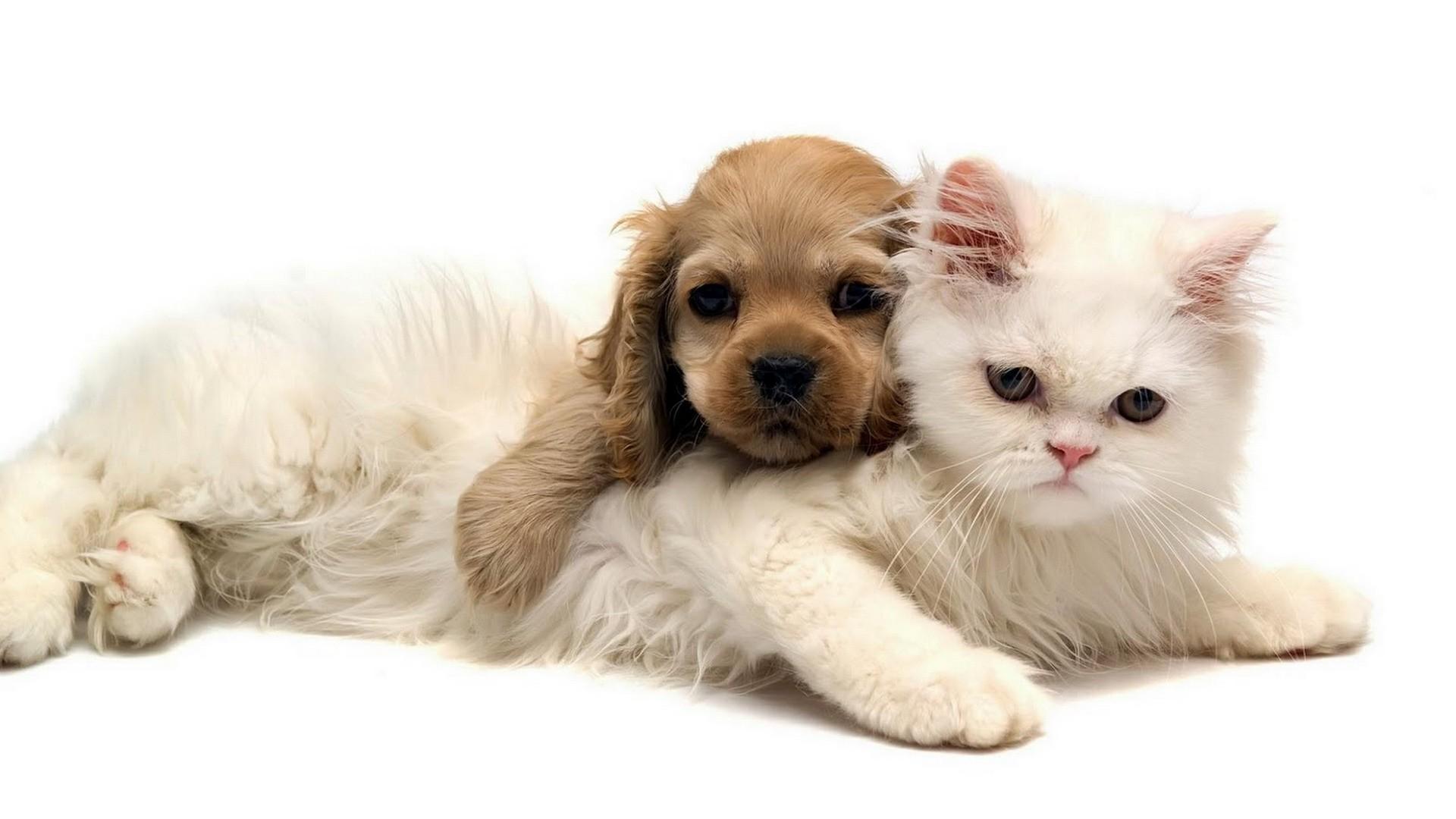 Download Cats Dogs Wallpaper 1920x1080 Wallpoper 260913 1920x1080