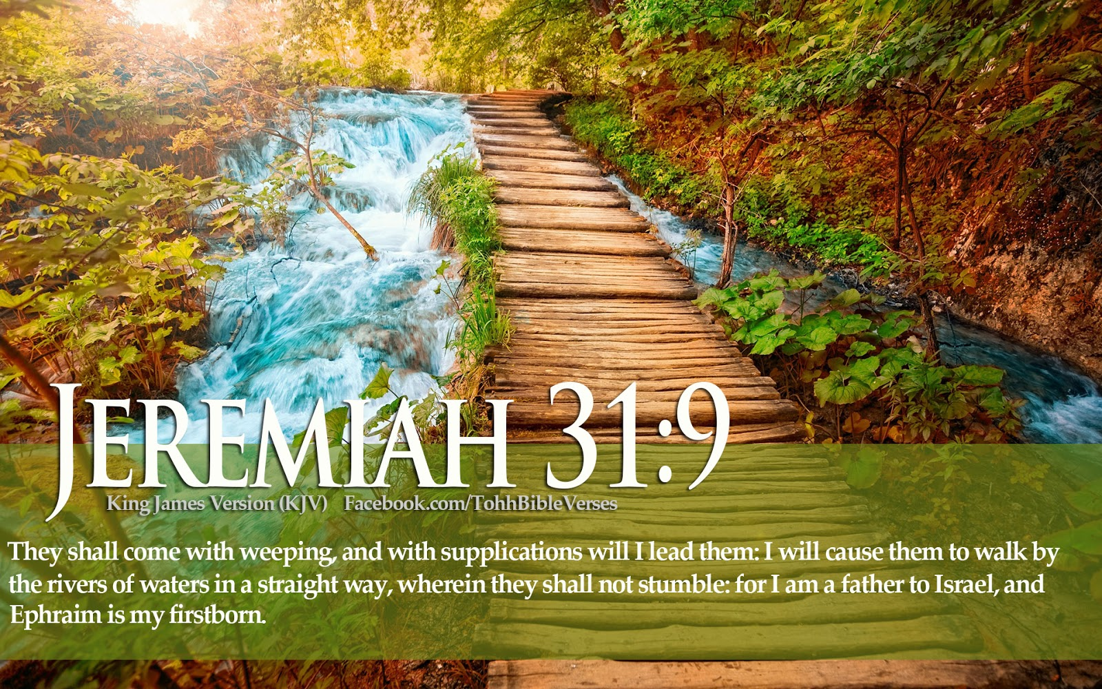 Download HD Christmas Bible Verse Greetings Card Wallpapers 1600x1000