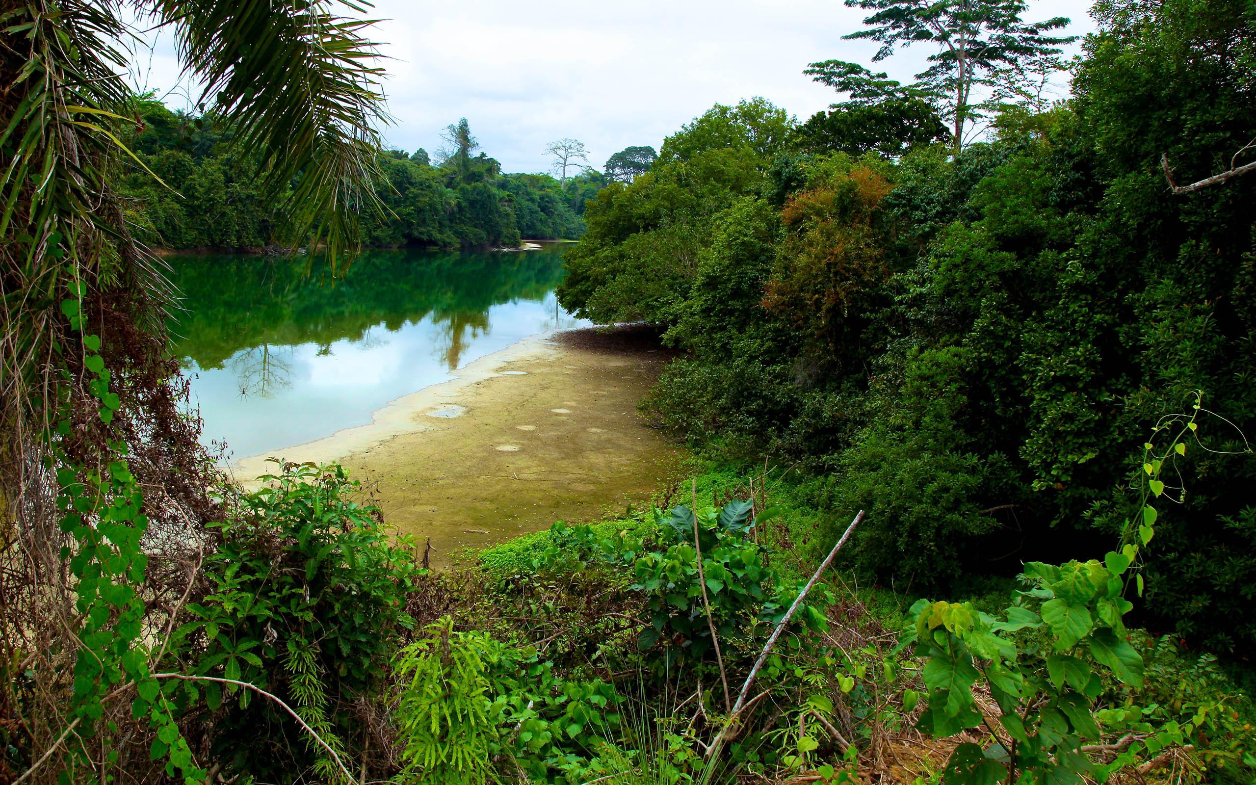 Gabon nature wallpaper   HD Wallpapers 2560x1600