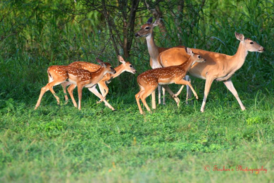 deer images deer photos deer photos deer photos deer photos 900x600