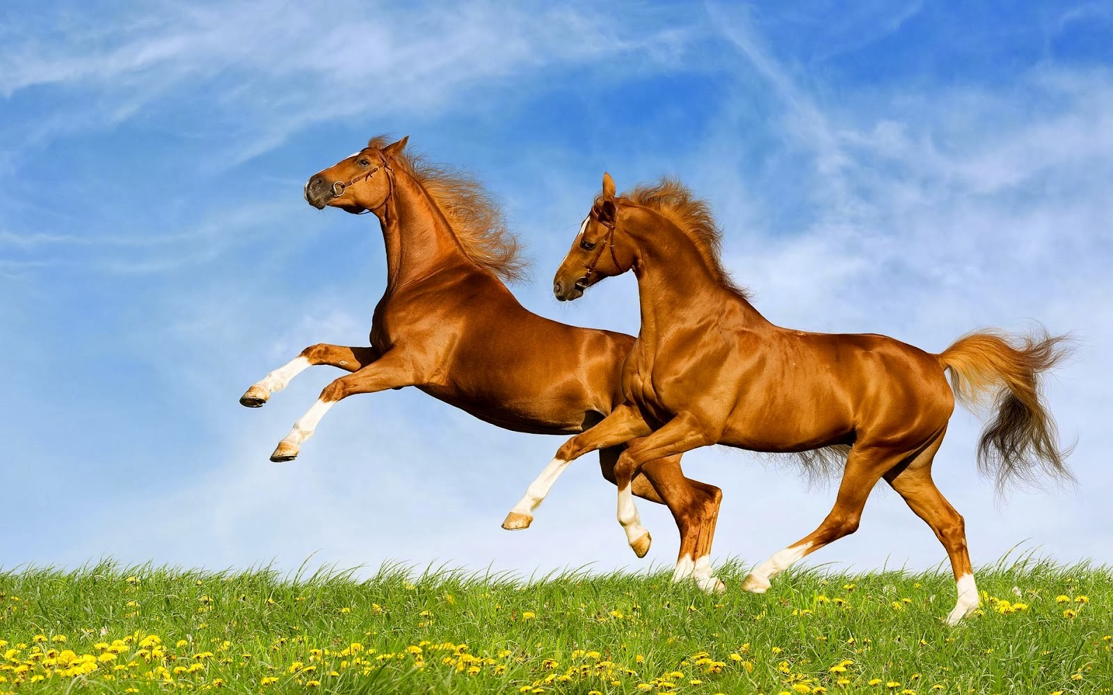 wallpapers desktop horse and make this HD wallpapers desktop 1600x1000