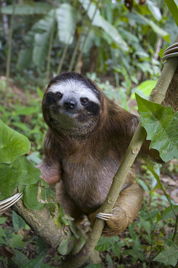 43 Hd Sloth Wallpaper On Wallpapersafari