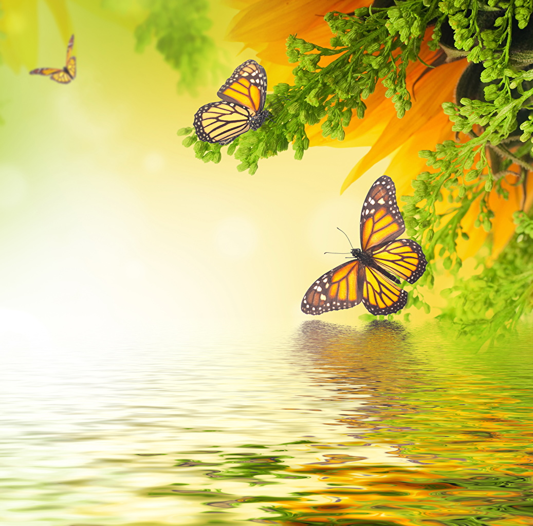 Images Monarch butterfly Insects Butterflies Animals 1037x1024