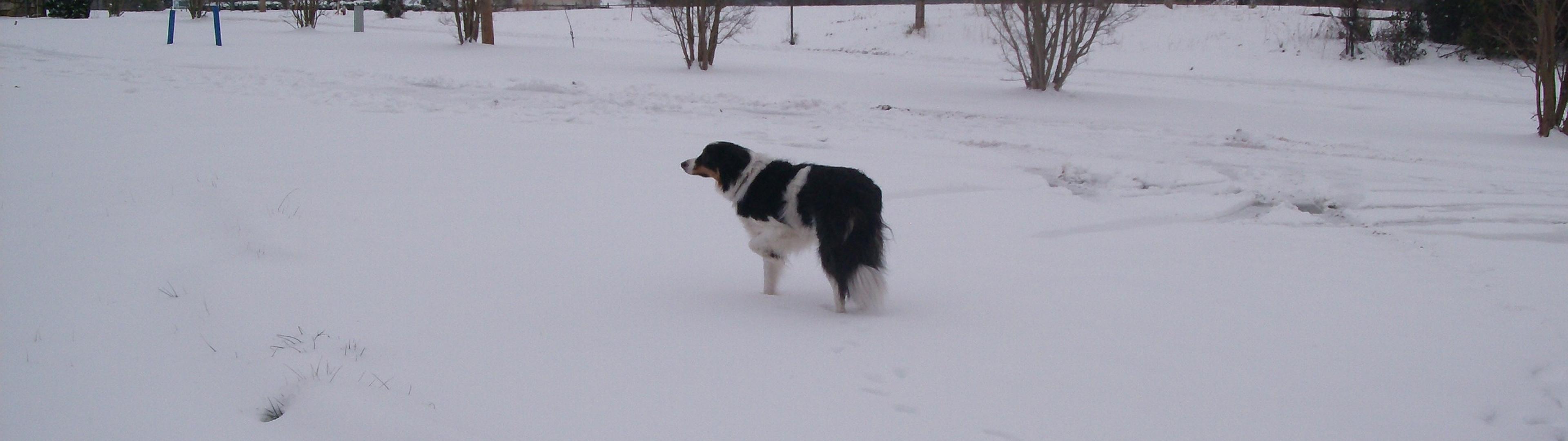 winter_animals_dogs_desktop_2560x1920_hd-wallpaper-1253847.jpg