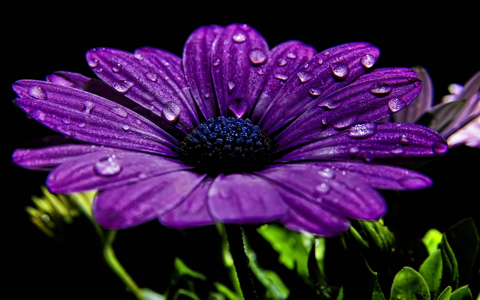 Tag Spring Drops Wallpapers Backgrounds Photos Images and Pictures 1600x1000