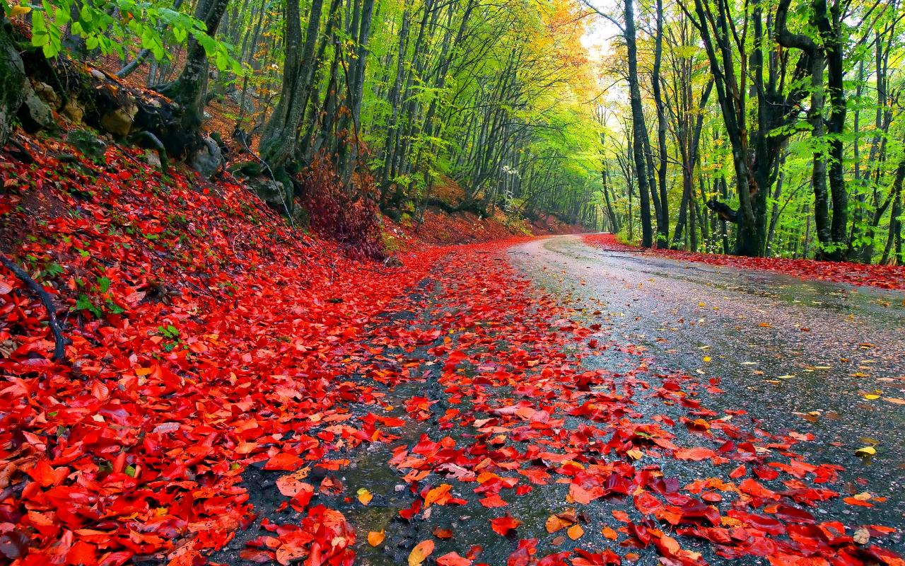 rainy autumn wallpaper   73047   HQ Desktop Wallpapers 1280x800