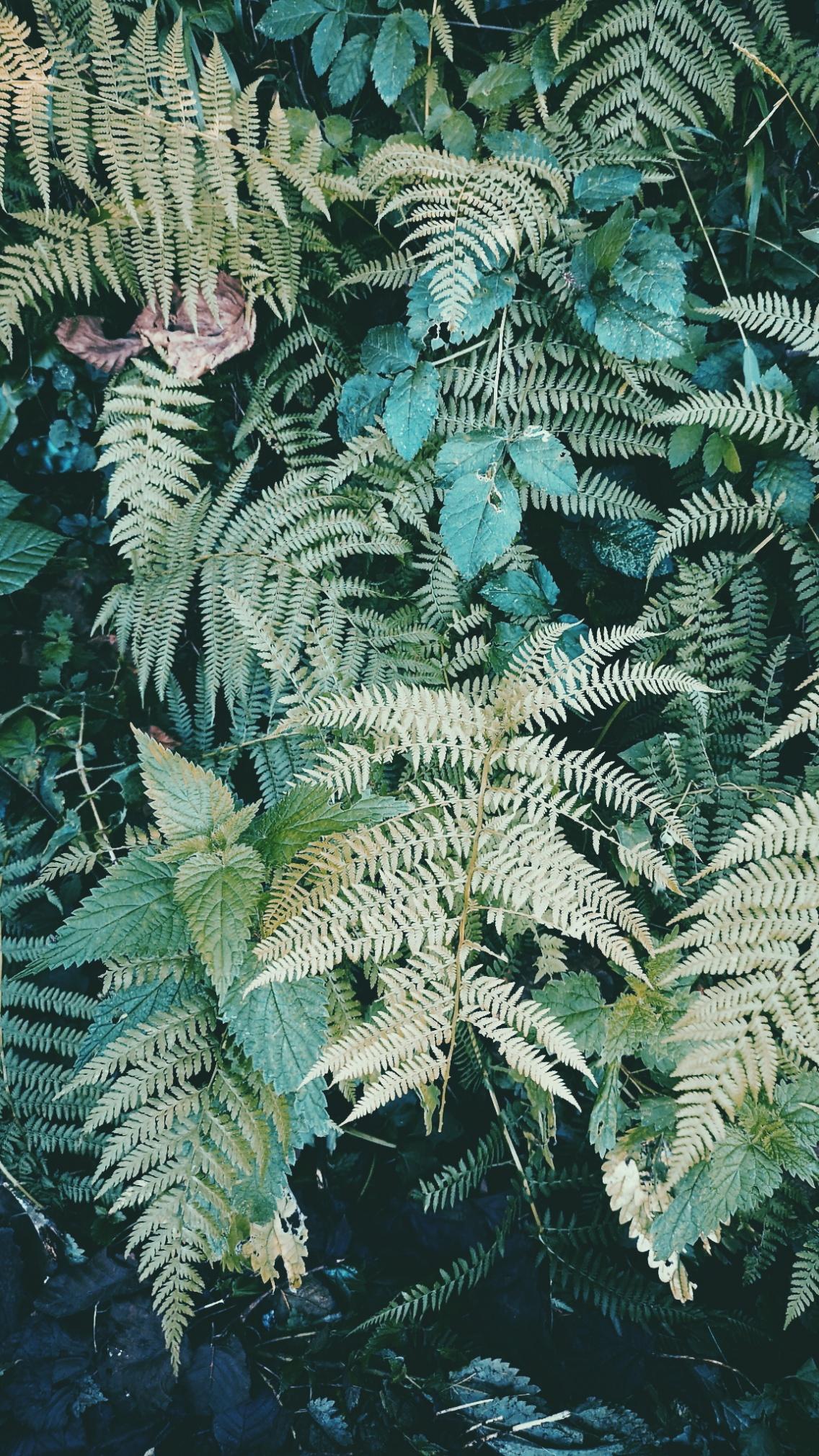 fern nature huaweip20pro p20pro turkey wallpaper vsco 1136x2021