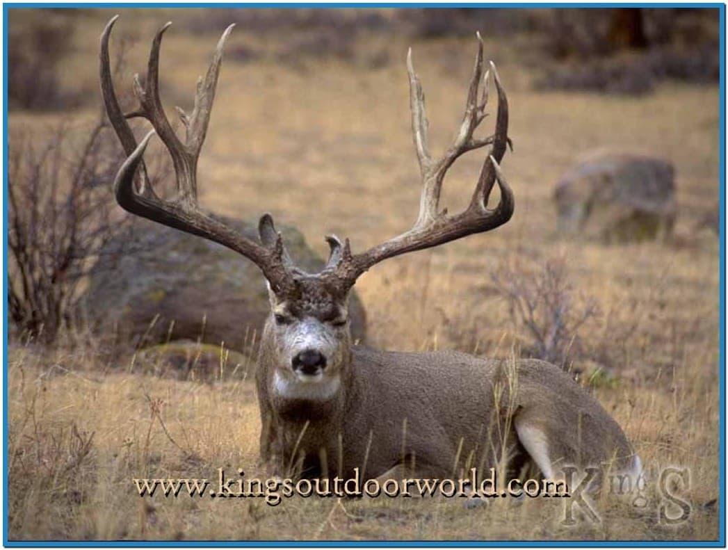 48 whitetail deer wallpaper screensaver on wallpapersafari - Free deer hunting screensavers ...