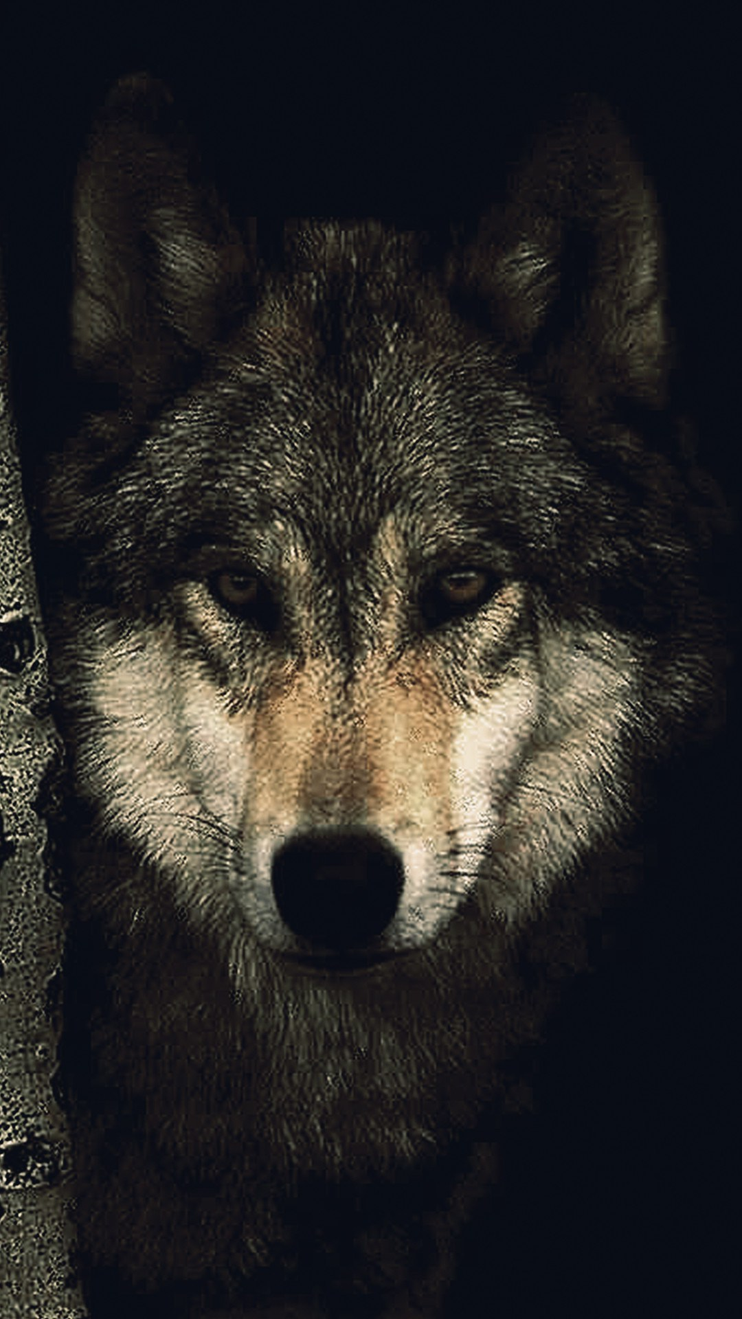 Free Download Download Lone Wolf Wallpaper 60 Wallpaper For Your Screen 1080x1920 For Your Desktop Mobile Tablet Explore 54 Wallpaper Of Wolf Wolf Wallpapers And Screensavers Wolf Images Free