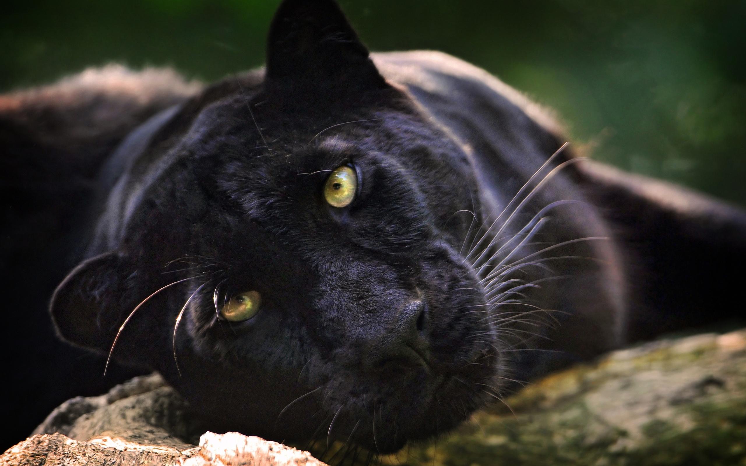 48 Black Panther Desktop Wallpaper On Wallpapersafari