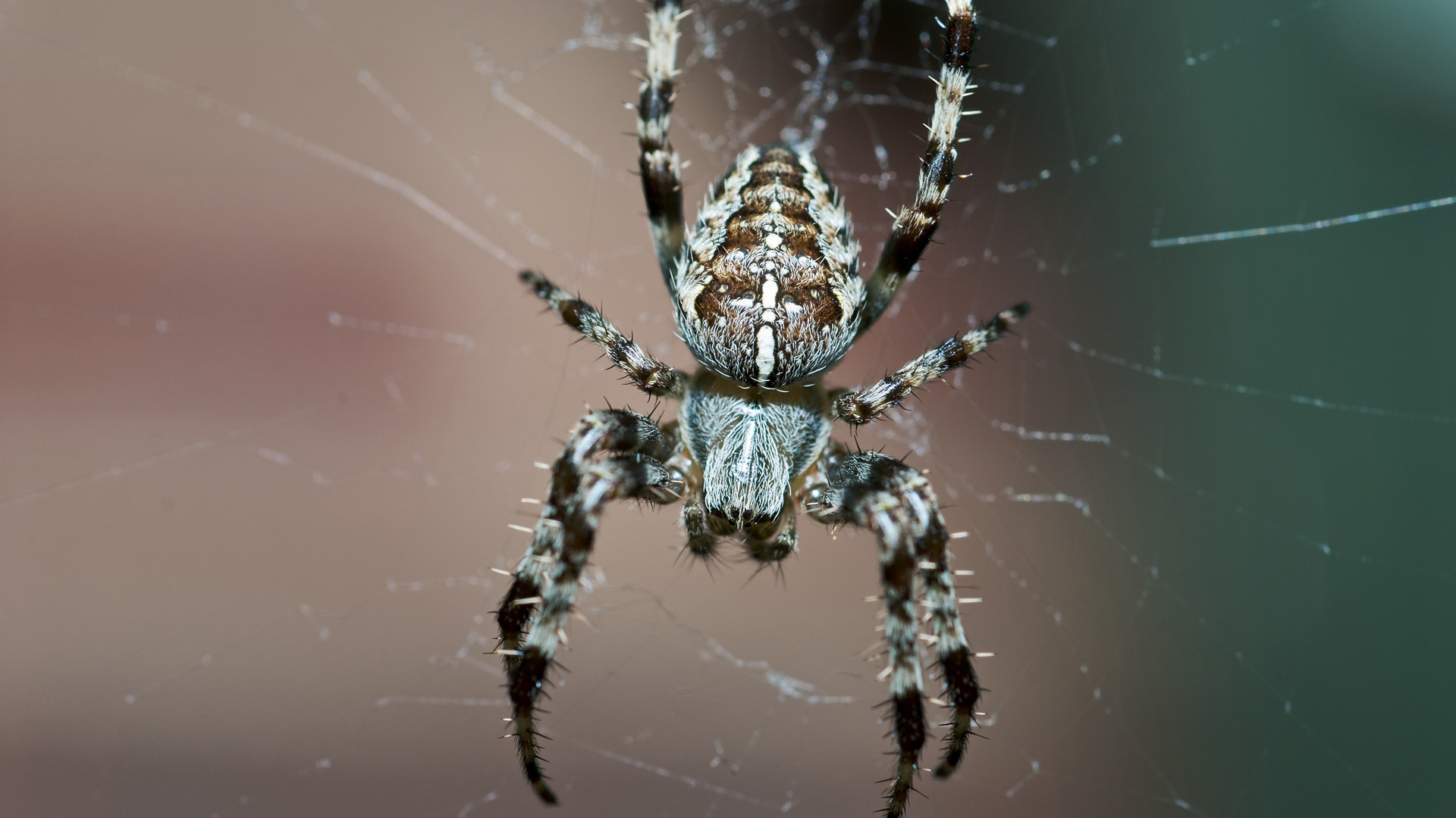 Download Wallpaper 1920x1080 spider insect legs small Full HD 1920x1080