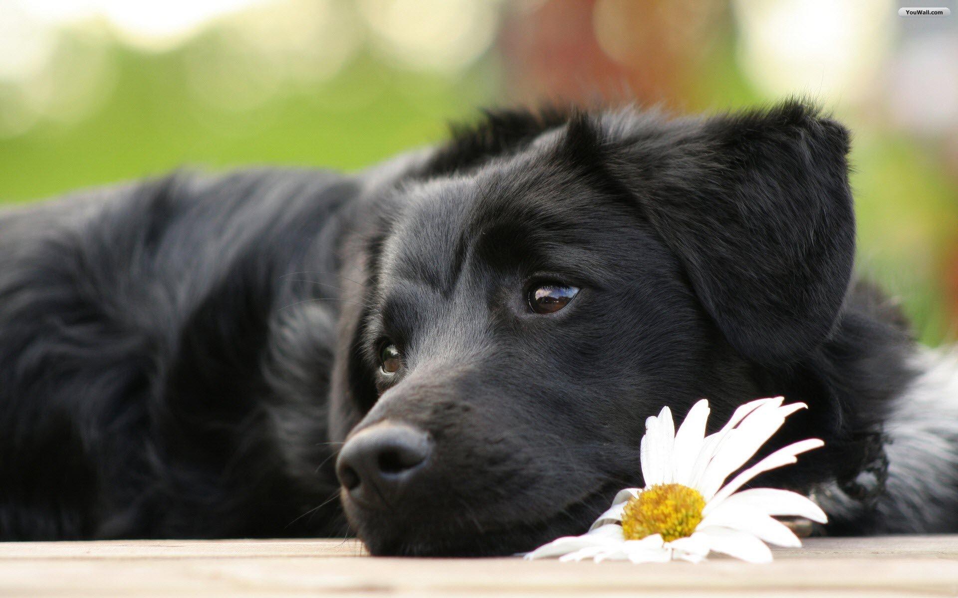 Black Beautiful Dog Wallpaper   wallpaperwallpapersfree wallpaper 1920x1200