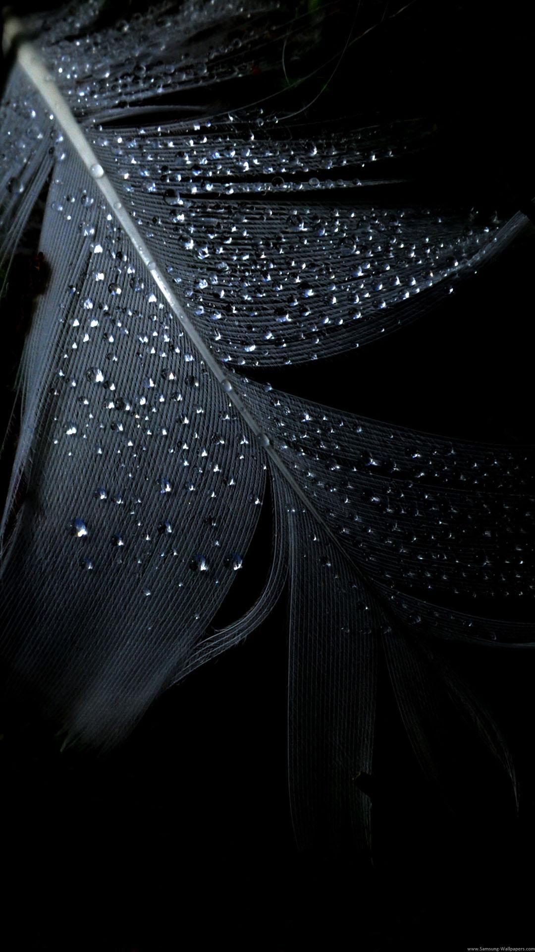 Black Feather Rain Drops iPhone 6 Plus HD Wallpaper iPod Wallpaper 1080x1920