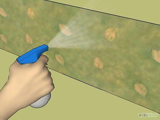 Removing wallpaper or border Decor Project Pinterest 550x413