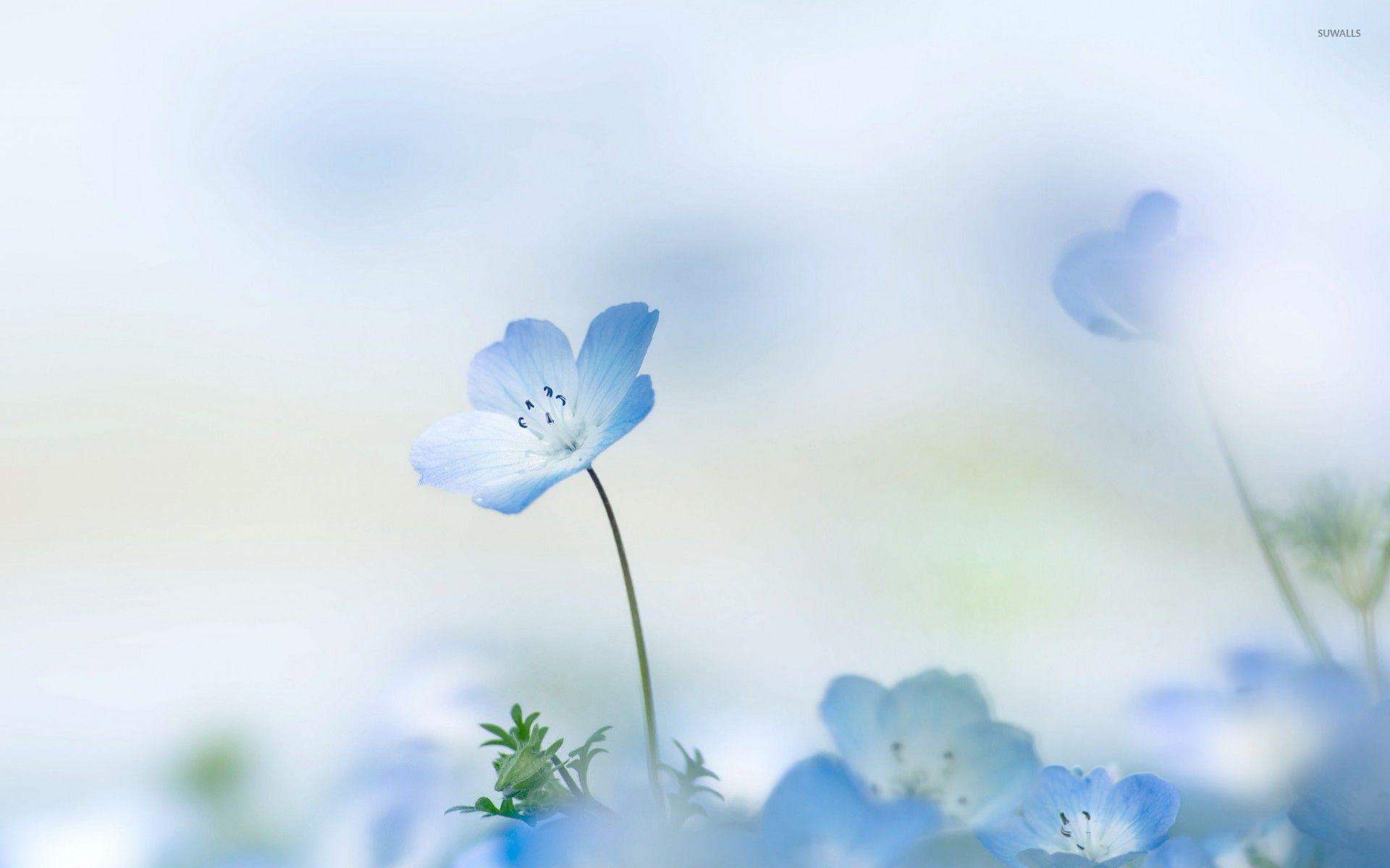 Blue Flower Wallpaper Backgrounds Download For 1920x1200