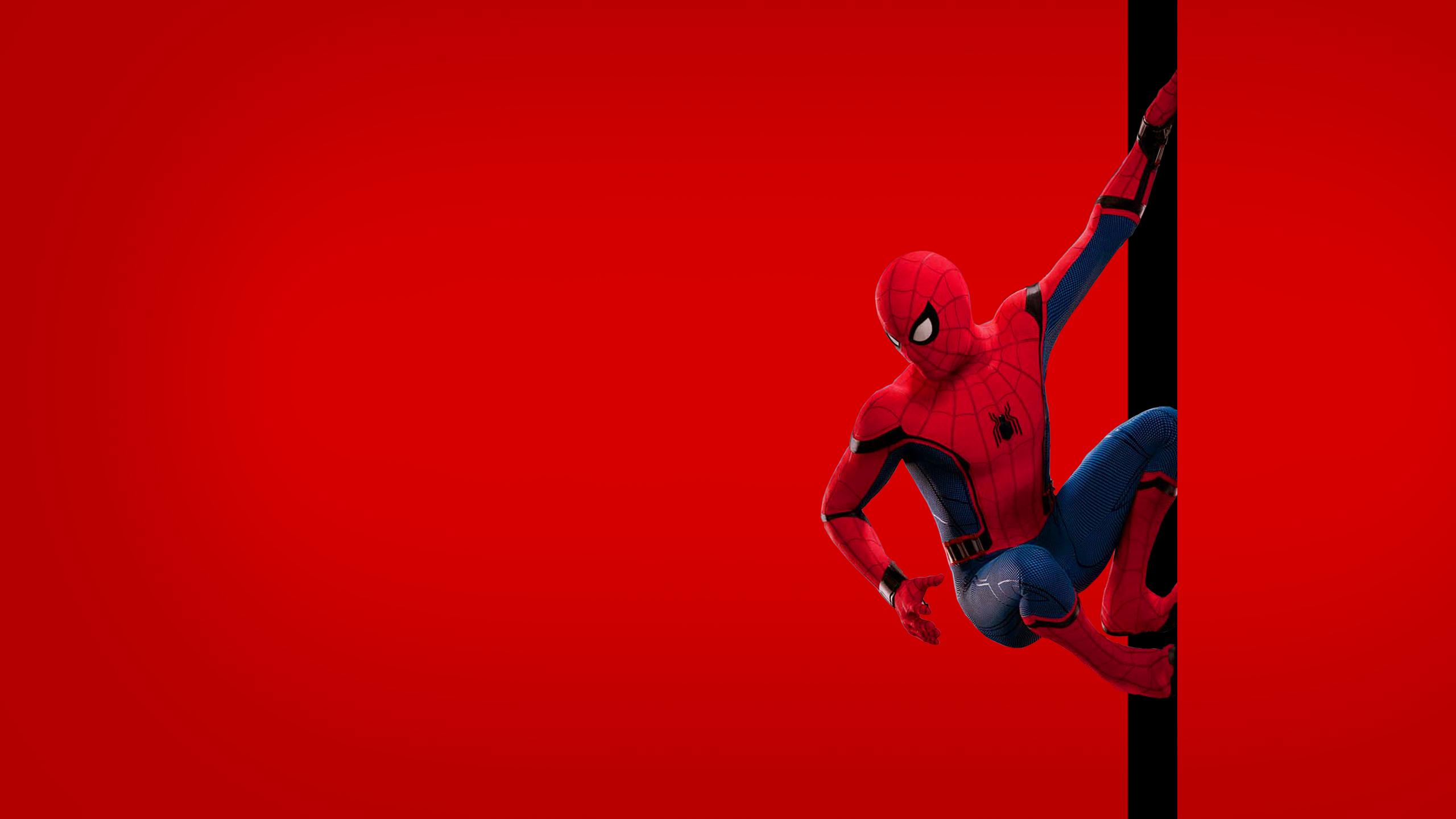 Spider Man Homecoming Wallpaper 15   2560 X 1440 stmednet 2560x1440