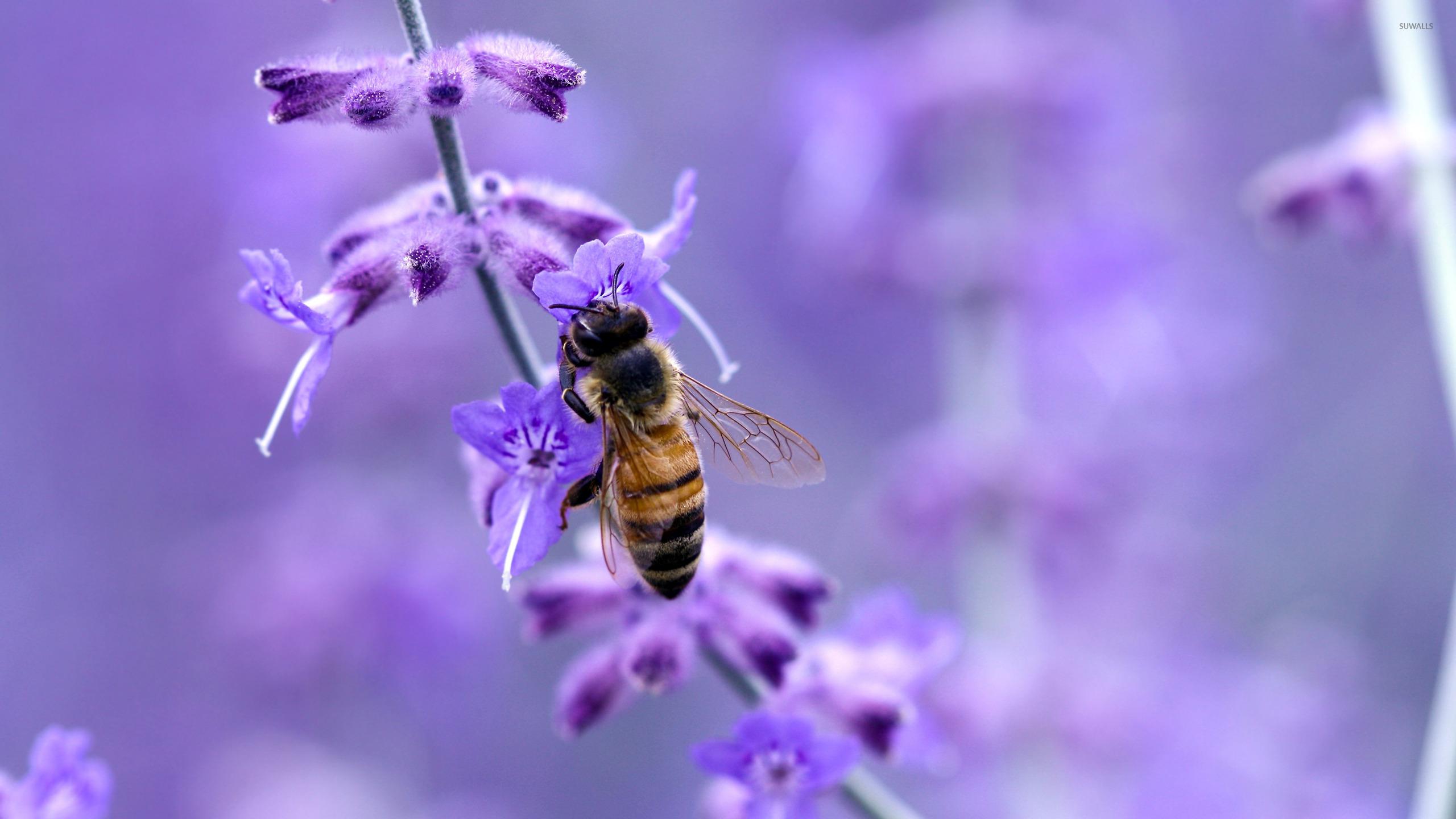 Bee [8] wallpaper   Animal wallpapers   18241 2560x1440