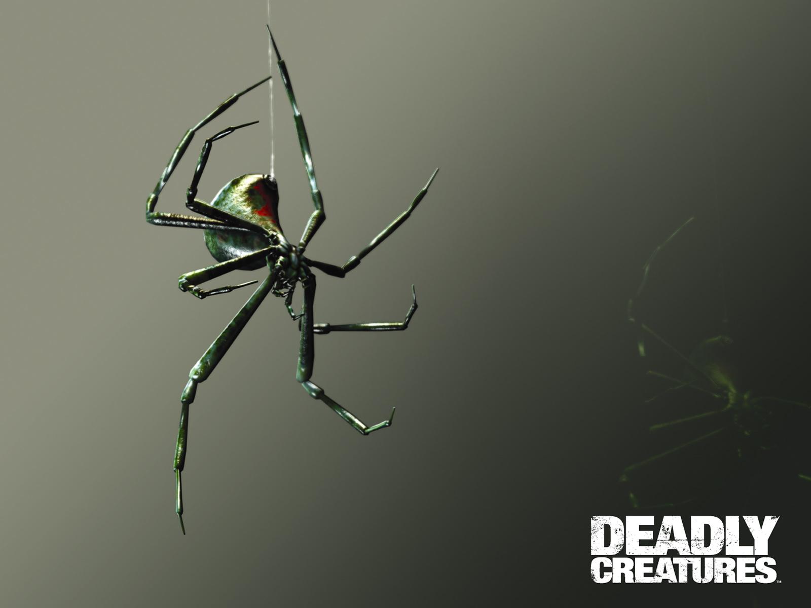 Black Widow   Deadly Creatures 1600x1200