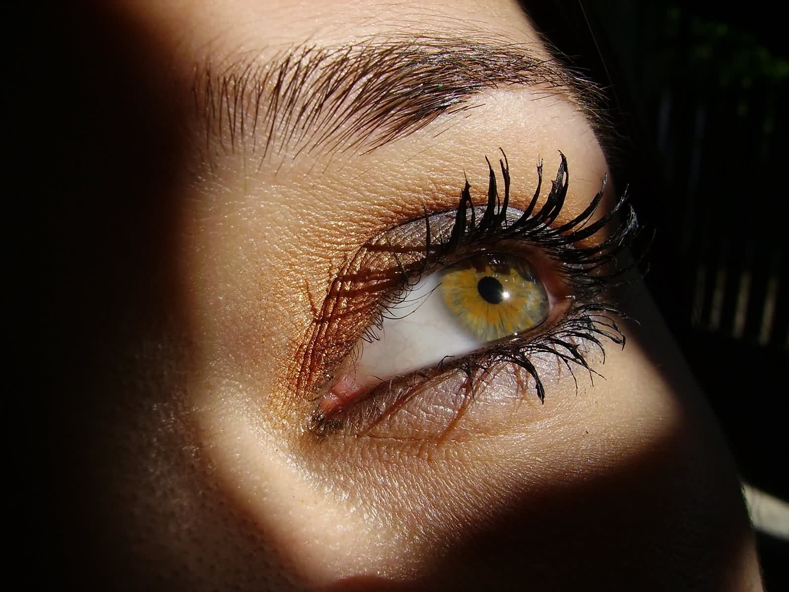 Download High quality eye in the light Eyes Wallpaper Num 10 1600x1200