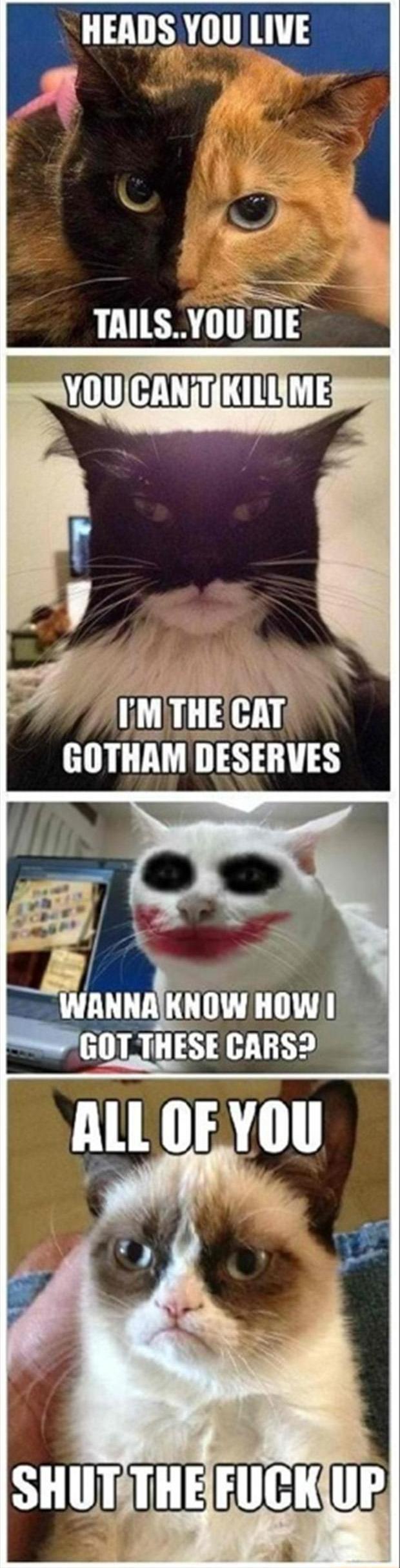 cat pictures funny grumpy cat pictures grumpy cat 65 pics grumpy cat 620x2429