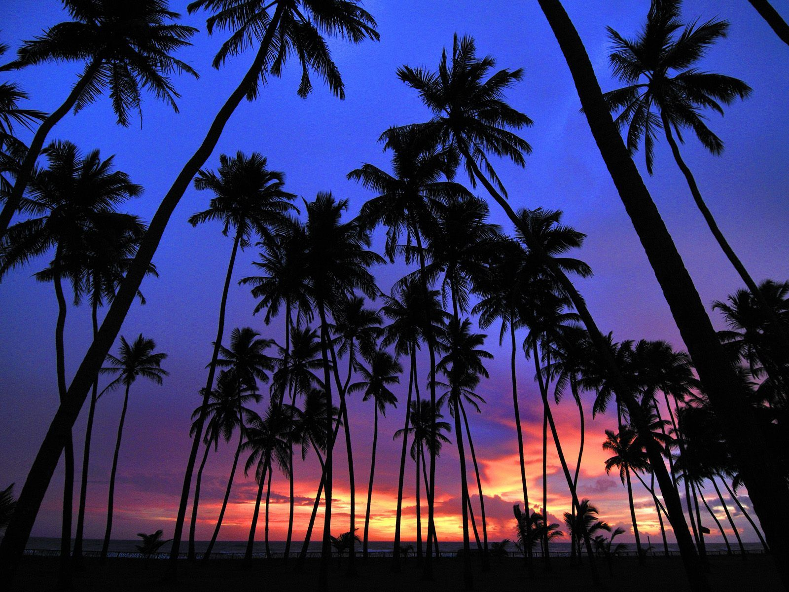 Palm Tree Background Wallpapers WIN10 THEMES 1600x1200