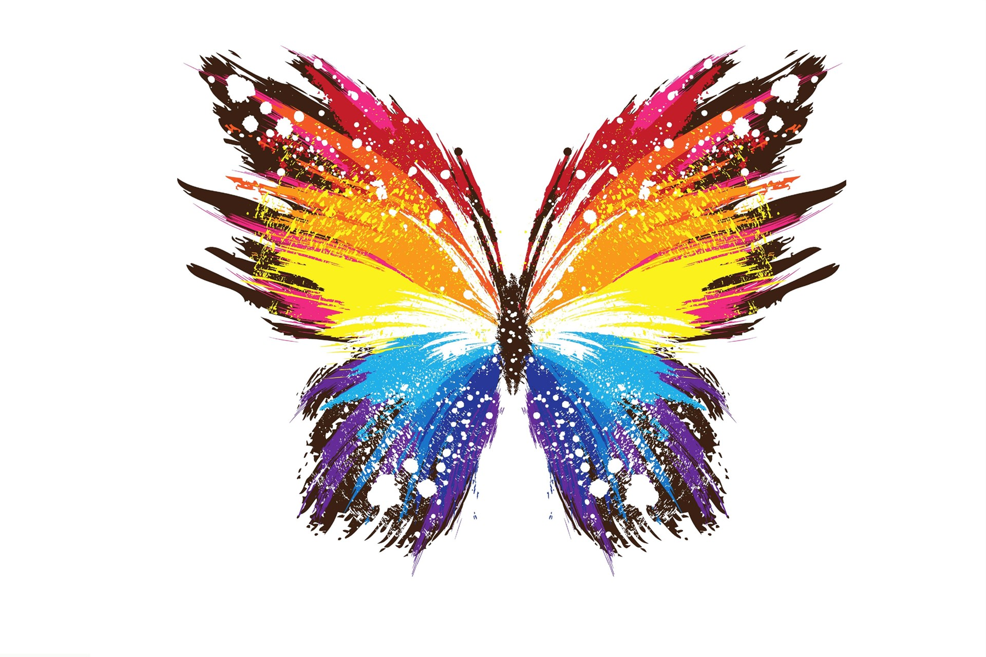 Colorful Butterfly Wallpapers 20 Background Wallpaper   Hivewallpaper 1920x1280