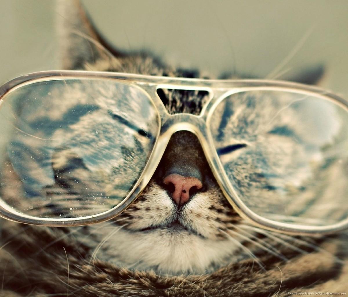Download Cat In Big Glasses Wallpaper For Samsung Galaxy Tab 1200x1024