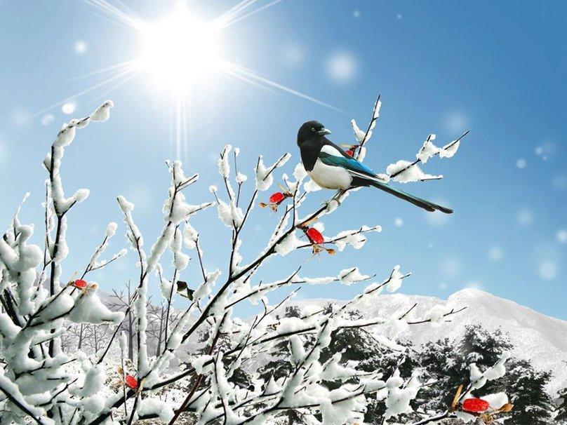 Winter bird wallpaper   ForWallpapercom 808x606