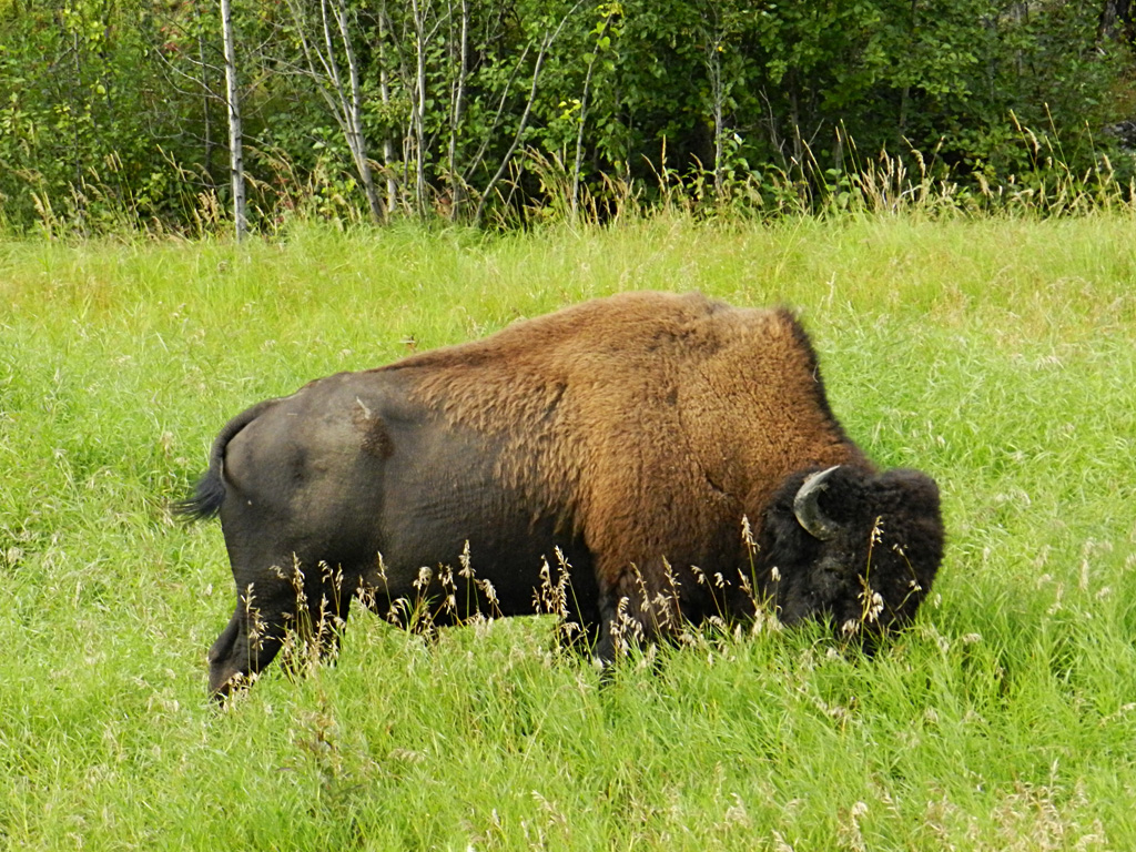 Beautiful Wallpapers For Desktop Buffalo Wallpapers hd 1024x768