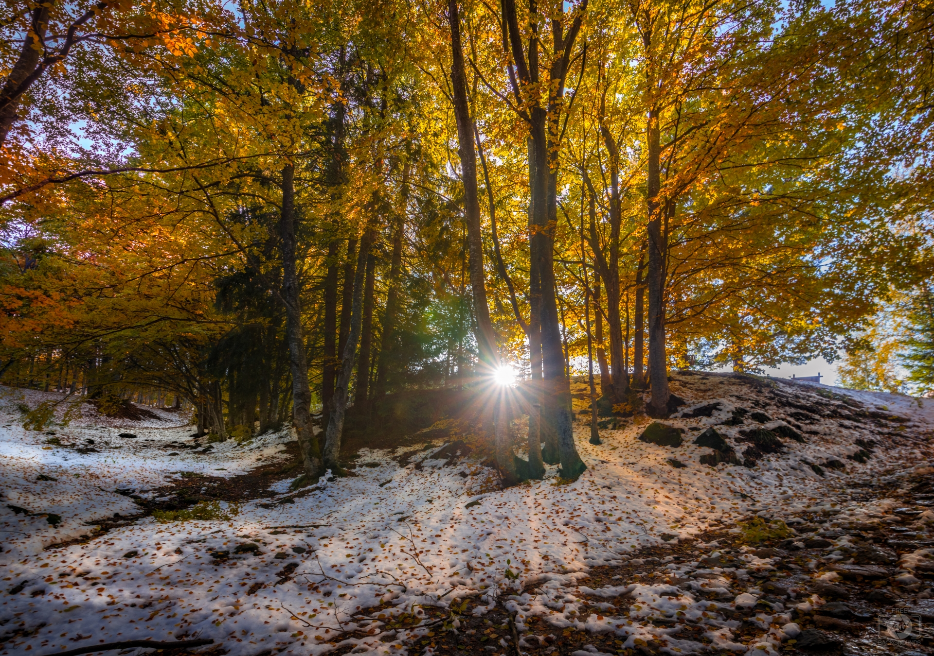 Early Winter Sunny Background   High quality Backgrounds 1920x1350