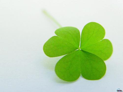 Four Leaf Clover Wallpaper 500x375