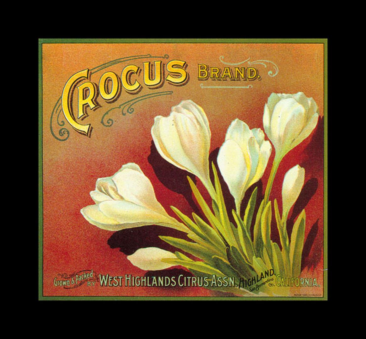 Crocus Brand Oranges   Vintage Fruit Crate Labels Wallpaper Image 1166x1080
