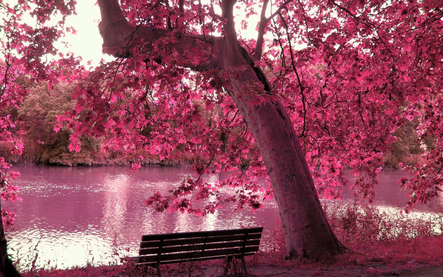 Spring Season Cherry Blossom Wallpaper Download wallpapers page 1440x900