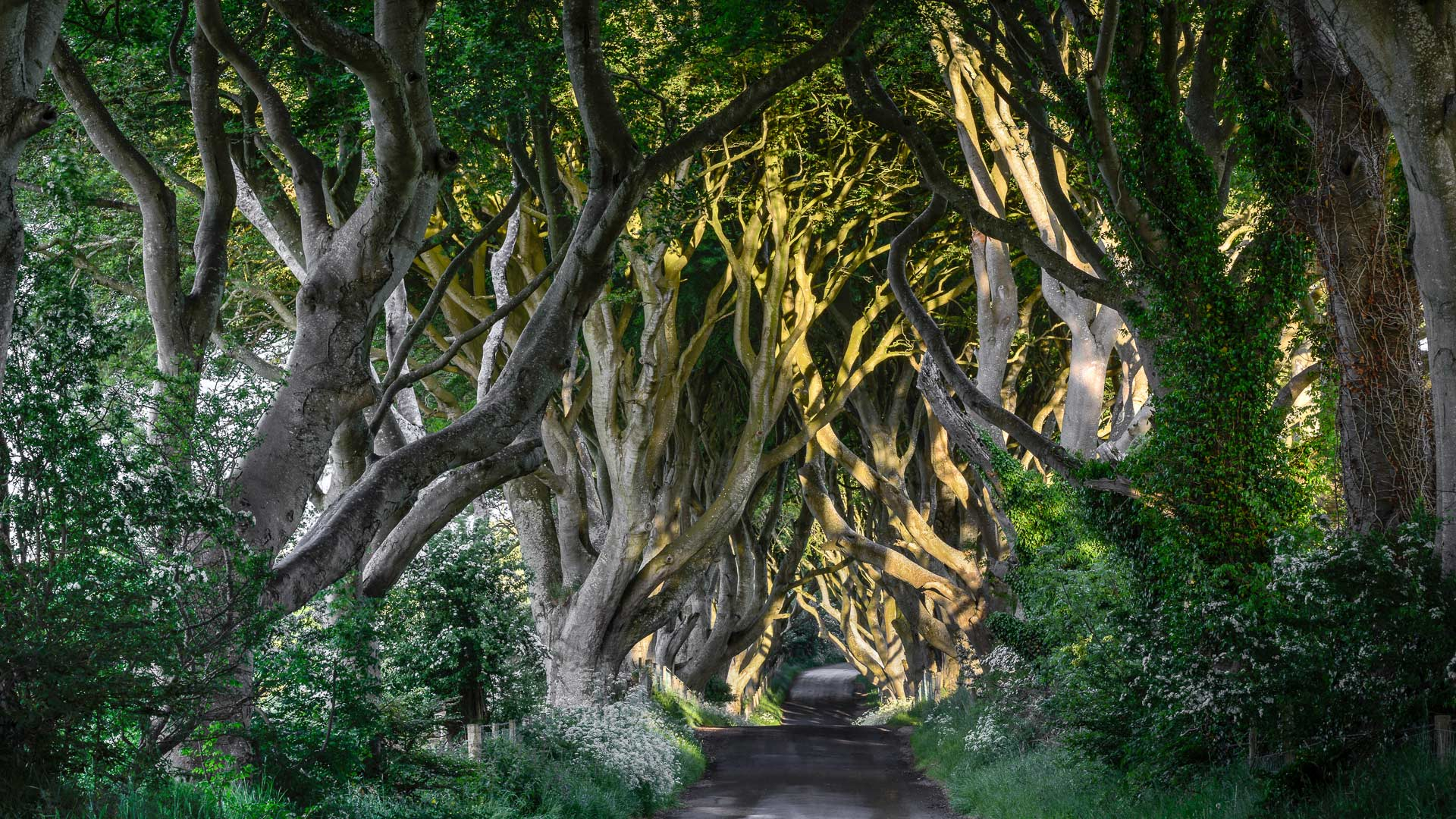 The Dark Hedges County Antrim Bregagh Road Northern Ireland UK 1920x1080