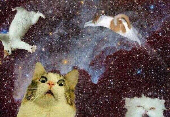 The Space Cats twitter account is the greatest thing ever 12 Pics 599x412
