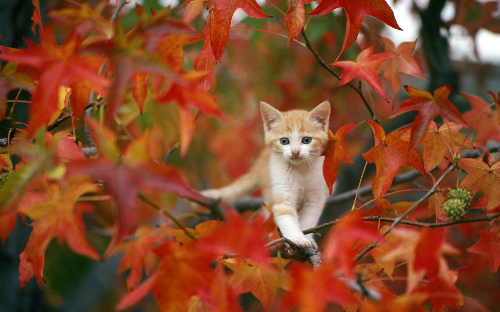whiskers trees autumn fall seasons leaves cute wallpaper background 1920x1200