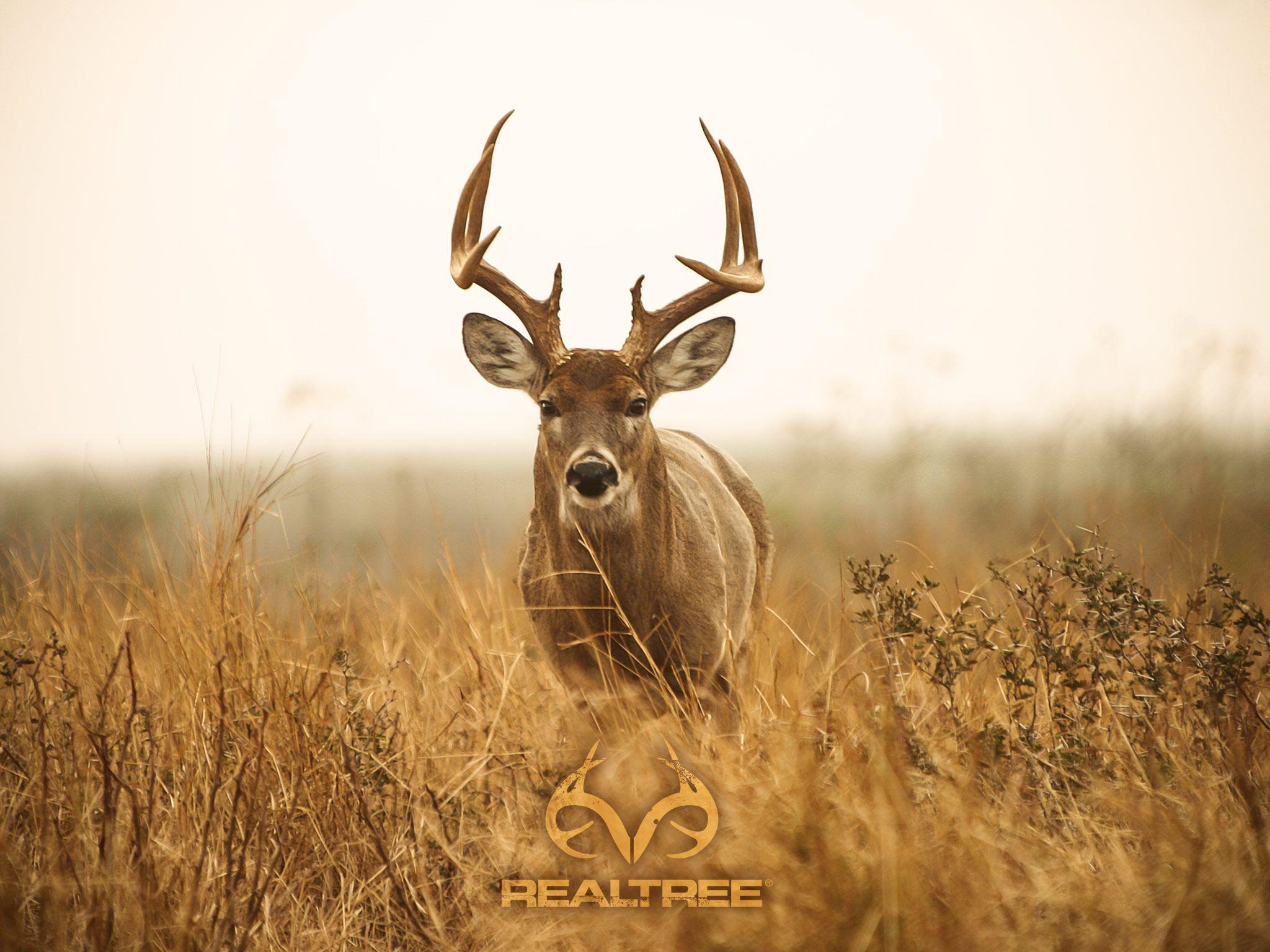 Whitetail Deer Hunting Desktop Wallpapers   Top Whitetail 2048x1536
