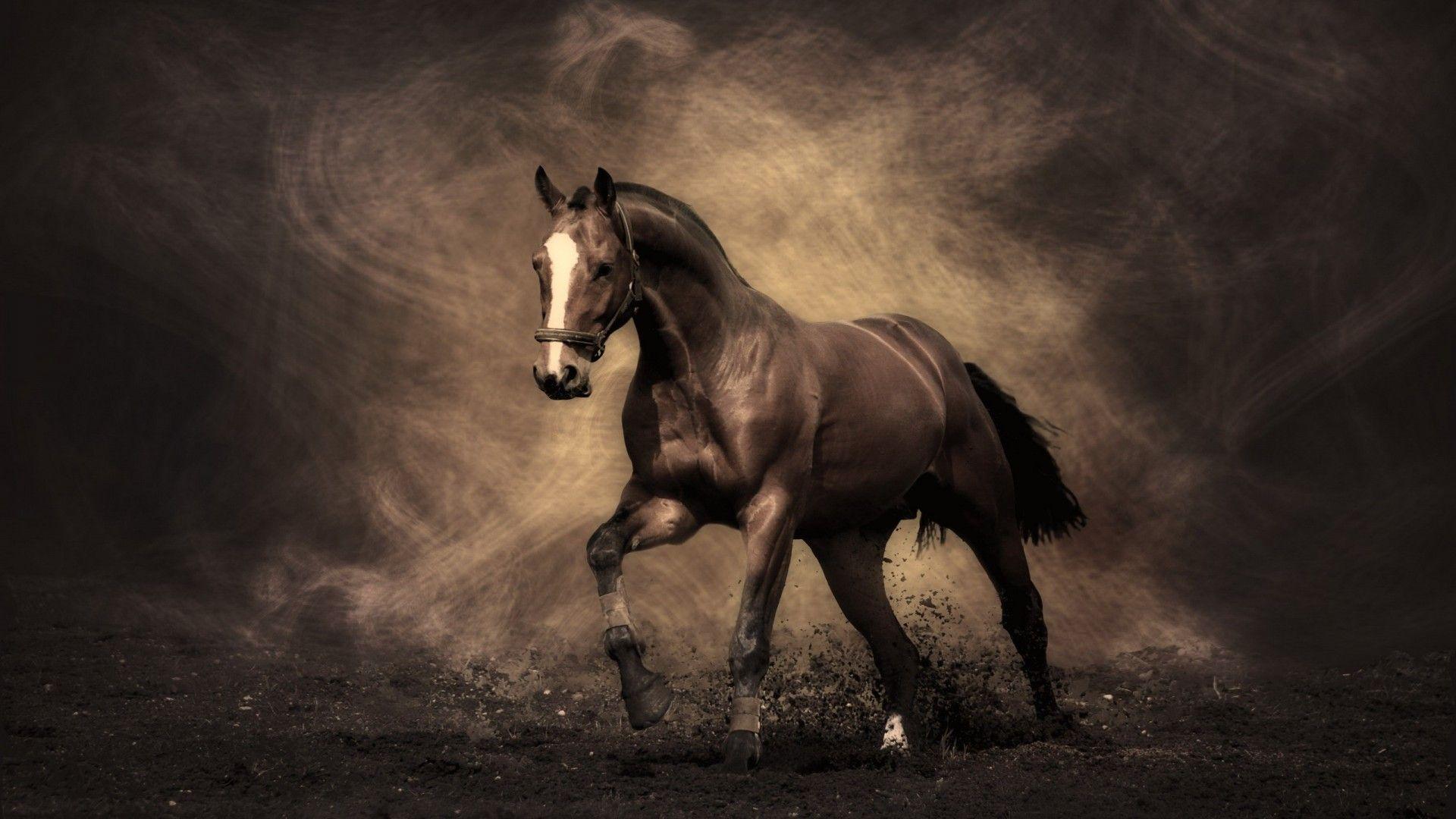 Black Horse Desktop Wallpapers 1920x1080
