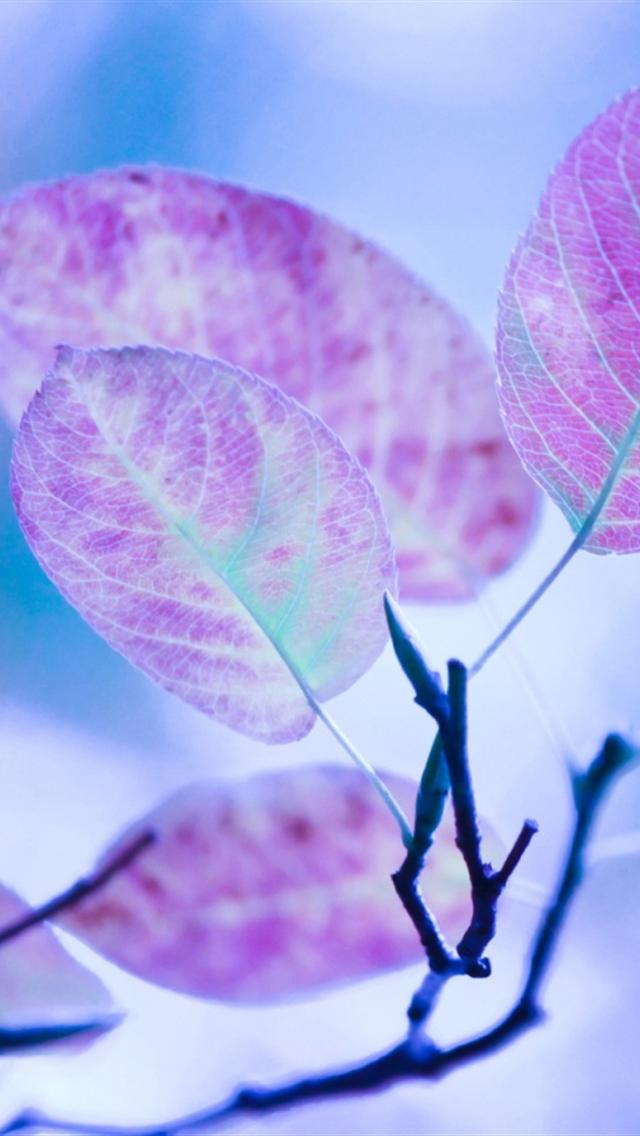 Free Download Iphone 5 Wallpapers Hd Cute Purple Leaves