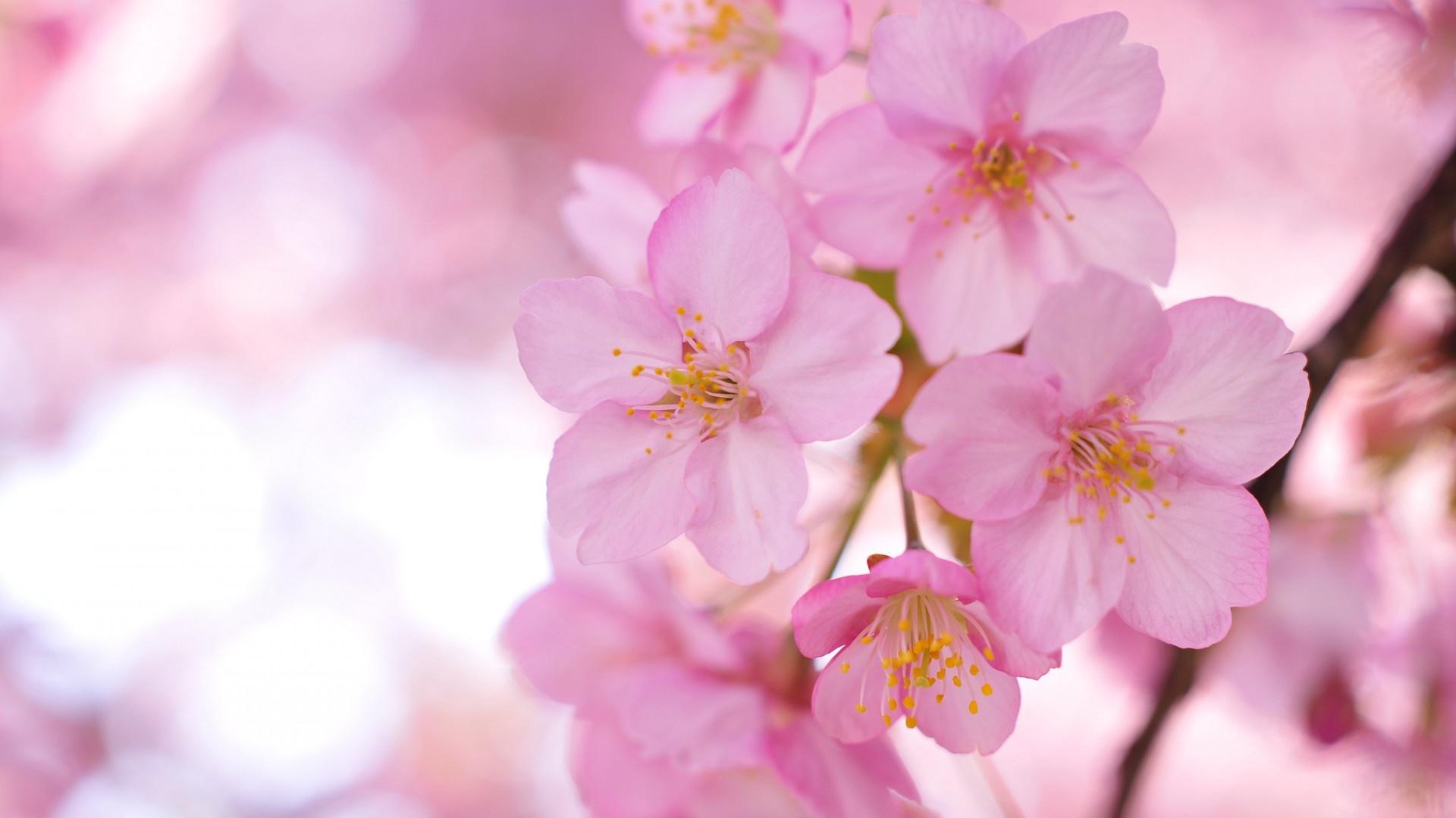 Pink Flower Wallpaper - WallpaperSafari