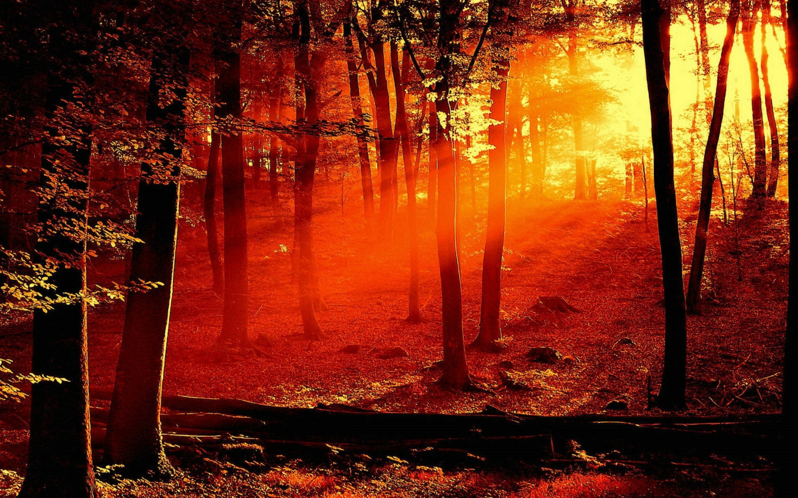 Wallpapers Forest Fire Myspace Backgrounds Forest Fire Backgrounds 2560x1600