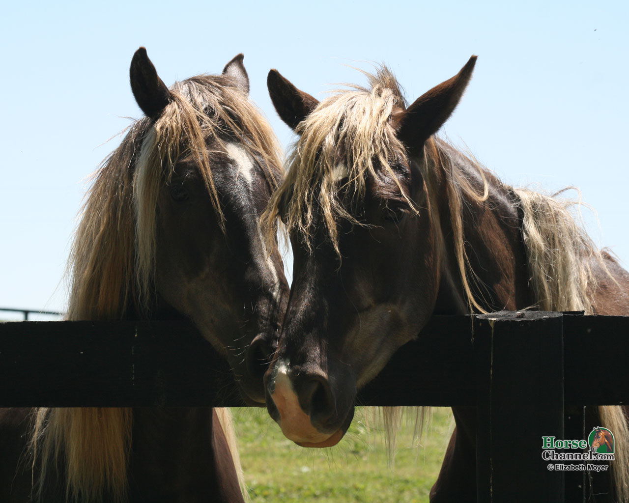 Rocky Mountain Horse Screensaver and Desktop Wallpapers 1280x1024