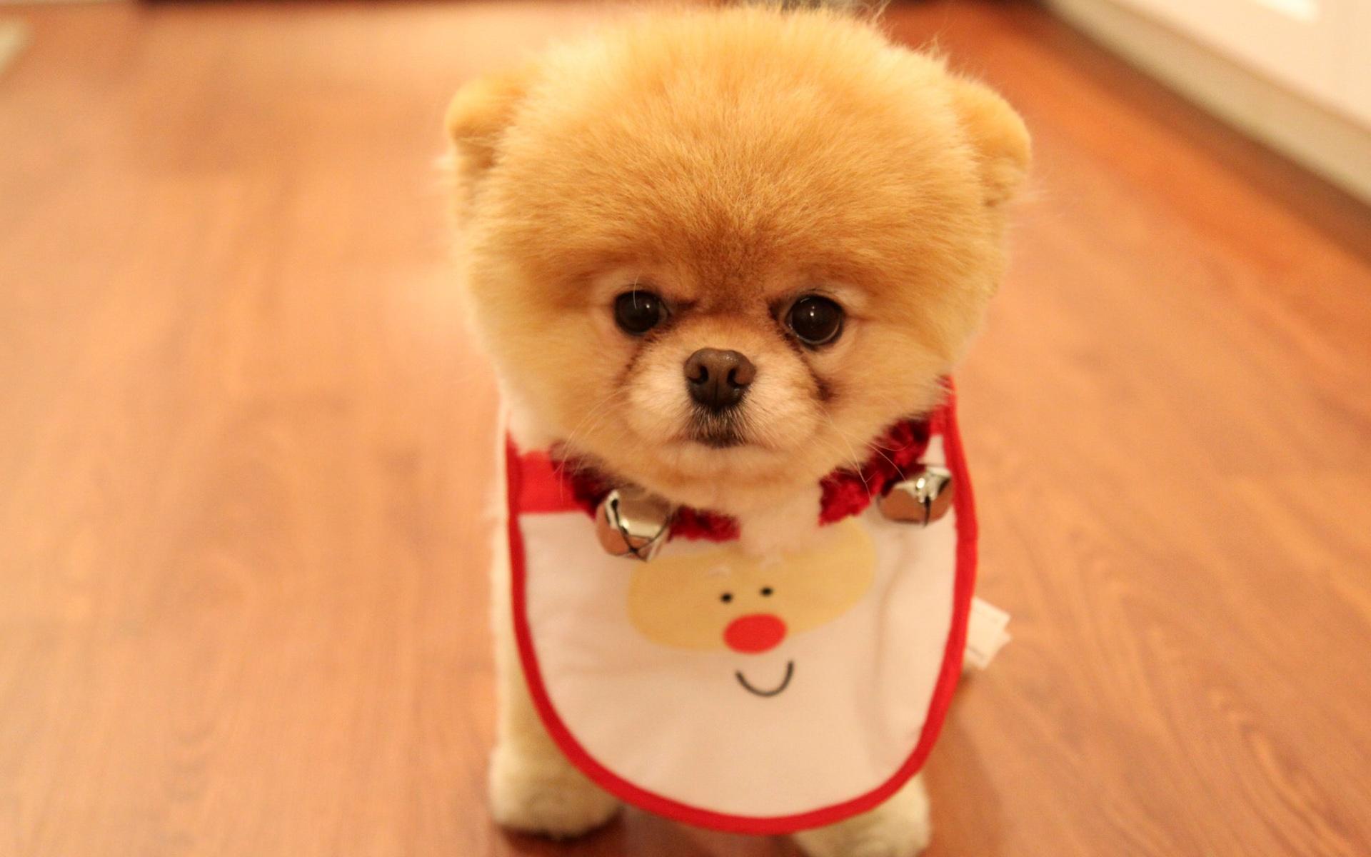 Cute Dog Christmas Wallpapers HD Wallpapers 1920x1200